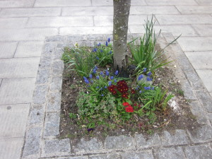 Photo of spring flowers in a tree pit in the library square