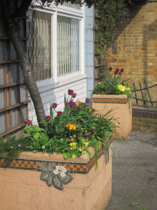 Tulips and wallflowers in the Stockwell Partnership planters