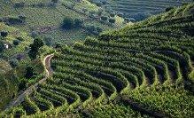 Portuguese wines 1